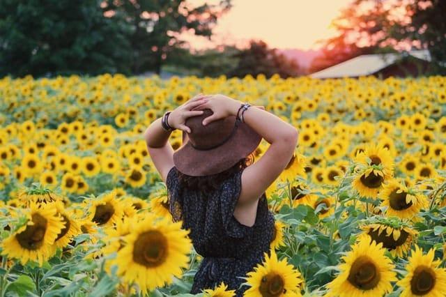 Mulher de costas em pé em campo de girassol