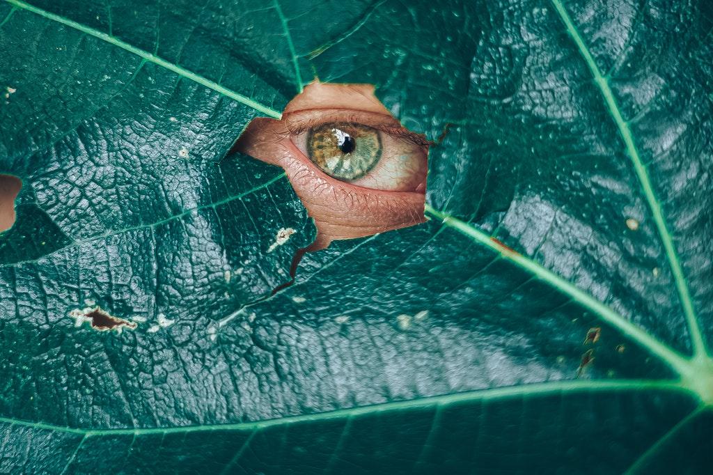 Folha verde escura com um furo central que dá foco a um olho esverdeado.