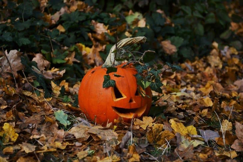 Imagem de uma cabeça de abóbora decorada em e disposta sobre um gramado com folhas de outono. Ela está decorando o jardim para celebrar o dia de Halloween.