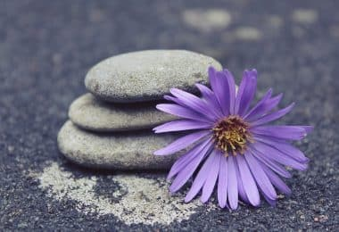 Imagem de um asfalto e sobre ele três pedras de diferentes tamanhos. Ao lado delas,, uma linda flor com pétalas roxa e o miolo amarelo.