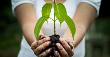 Mulher com as mãos ocupadas por terra e planta.