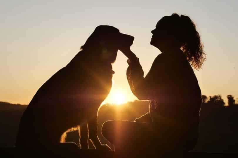 Imagem de um cachorro e sua dona. Ela segura o rosto do cachorro fazendo um afago nele. Ao fundo um lindo por do sol.
