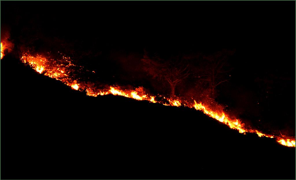 Imagem noturna de uma floresta e ao fundo o fogo queimando a mata.