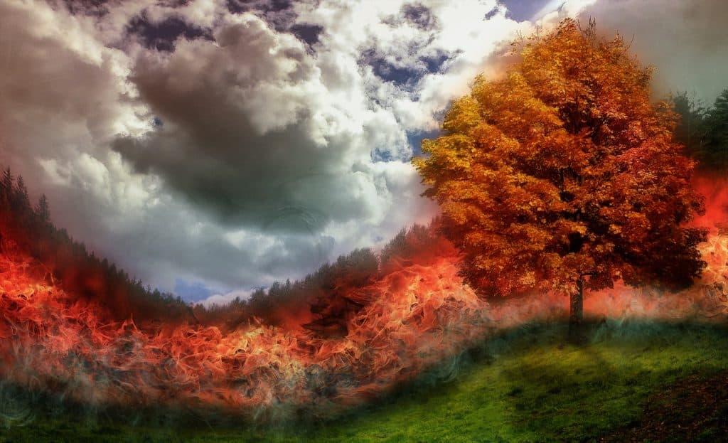 Imagem de uma floresta pegando fogo.