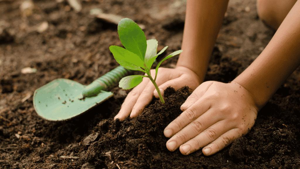 Criança plantando uma mudinha na terra