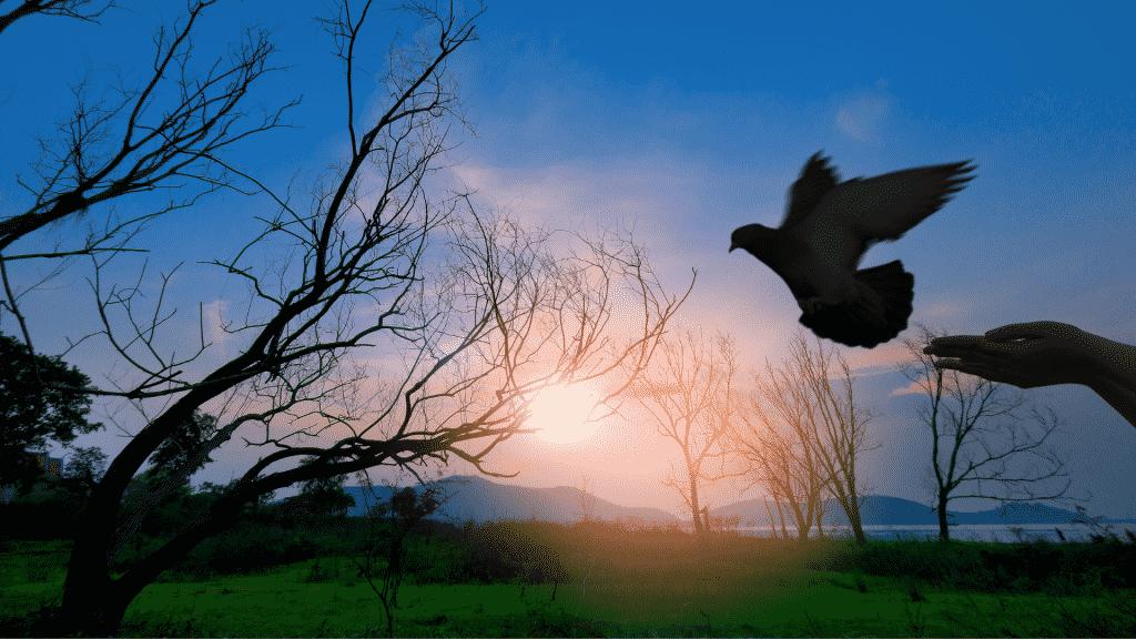 Silhueta de uma pomba sendo solta sob o pôr do sol
