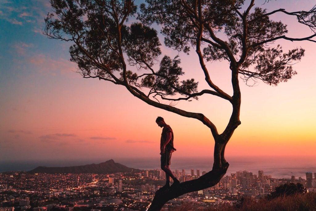 Homem em cima da árvore contemplando a cidade