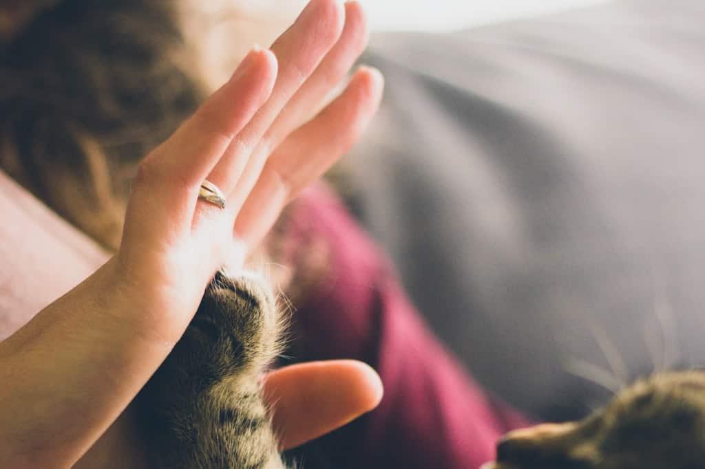 Pata de gato unida à mão humana.