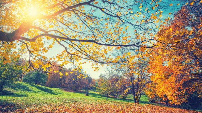 Foto de árvores no outono