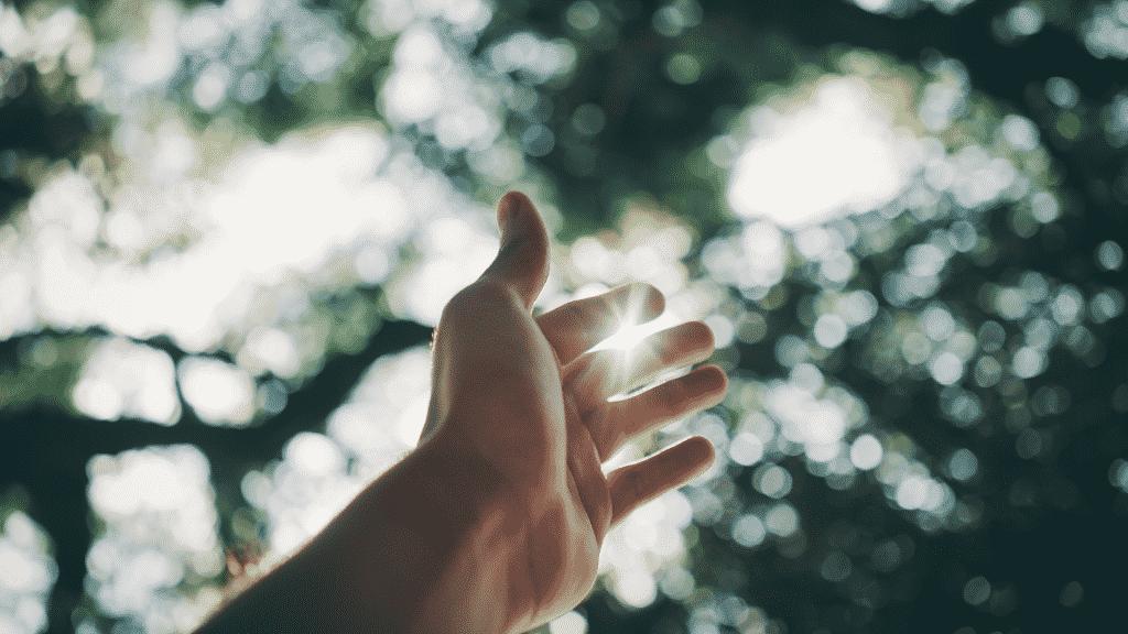Mão estendida para o céu coberto pelas copas das árvores