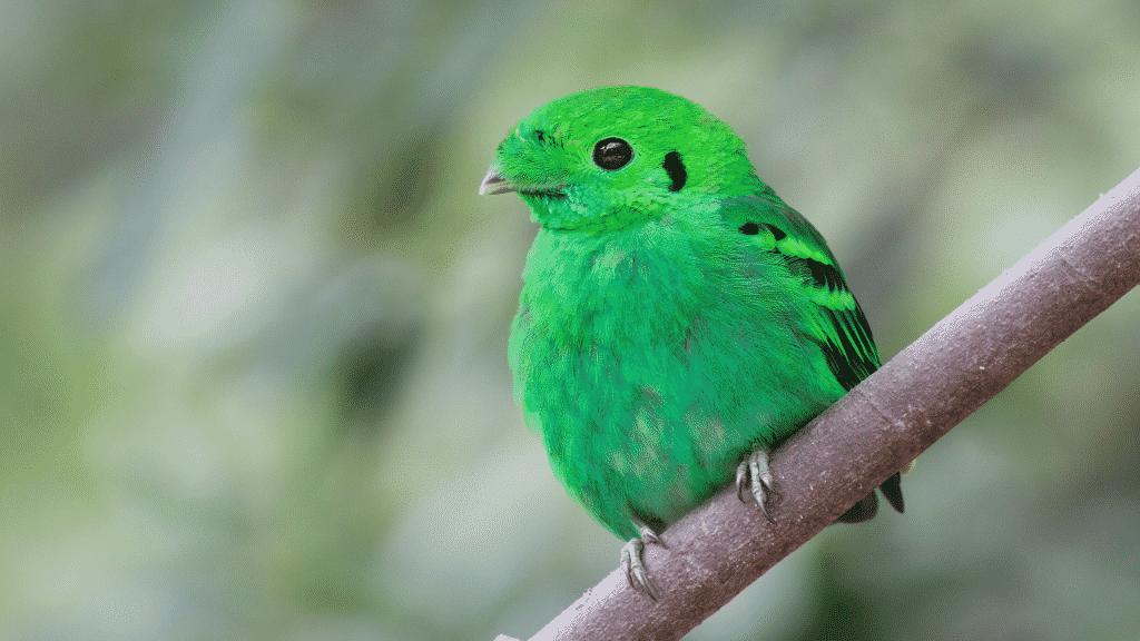 Pássaro verde em galho