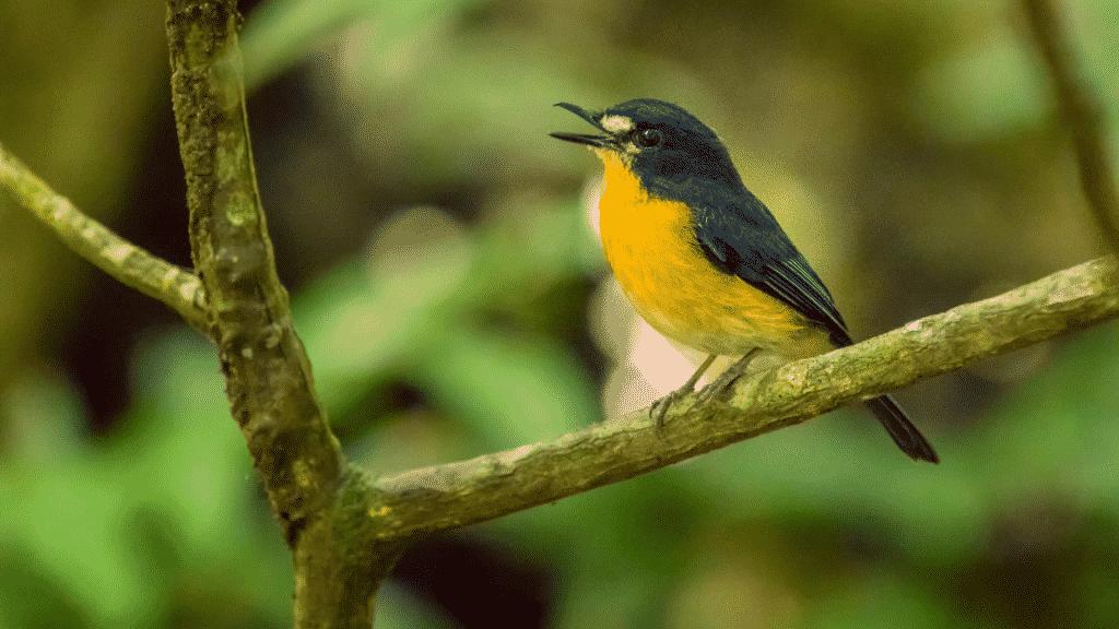 Pássaro cantando em galho de árvore