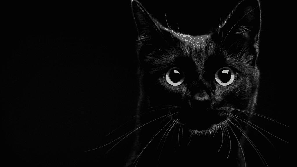 Imagem de um gato preto
