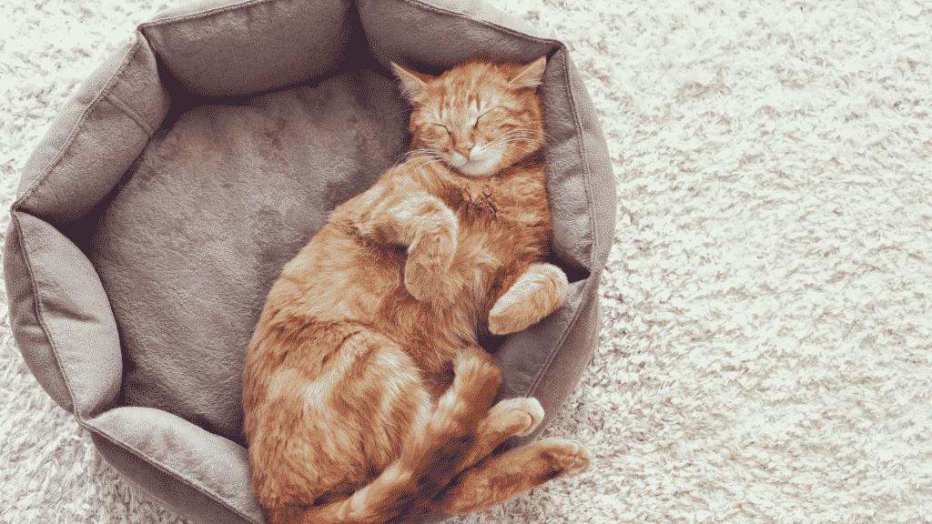 Gato dormindo na caminha