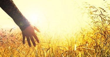 Imagem de uma mão refletida na luz do sol recebendo a energia que ele emada.