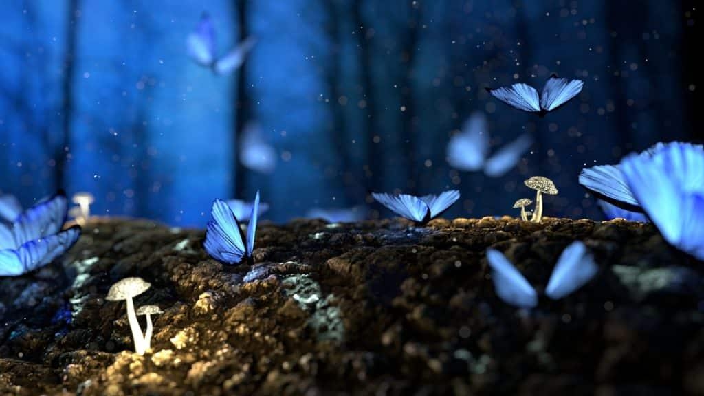 Várias borboletas-azuis.
