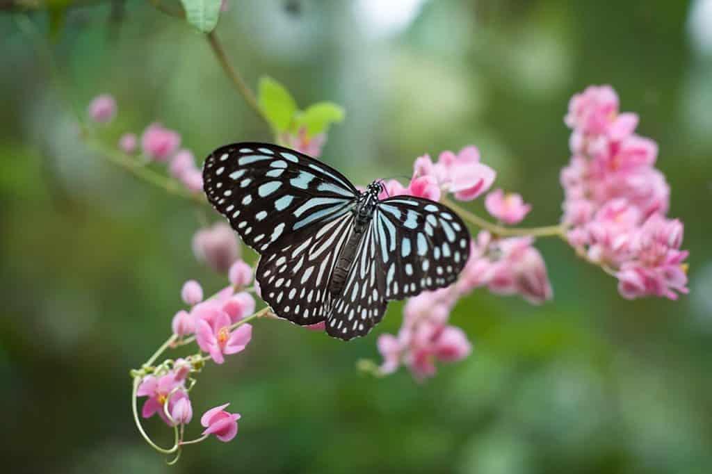 Uma borboleta se apoiando em uma flor.