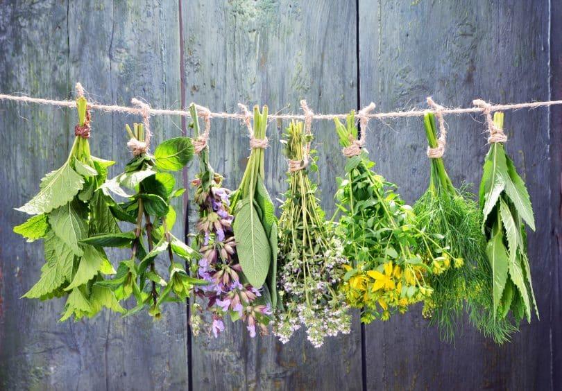 Imagem de várias ervas aromáticas penduradas em um varal de barbante. Elas estão sendo preparadas para serem utilizadas em um banho aromático.