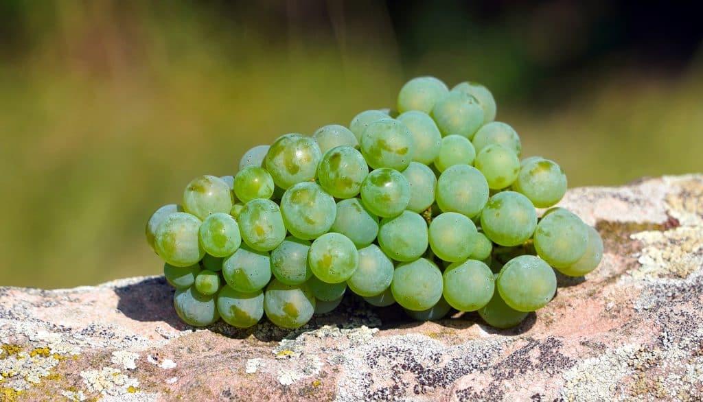 Imagem de um lindo cacho de uvas verdes disposto sobre um pedaço de tronco de madeira.