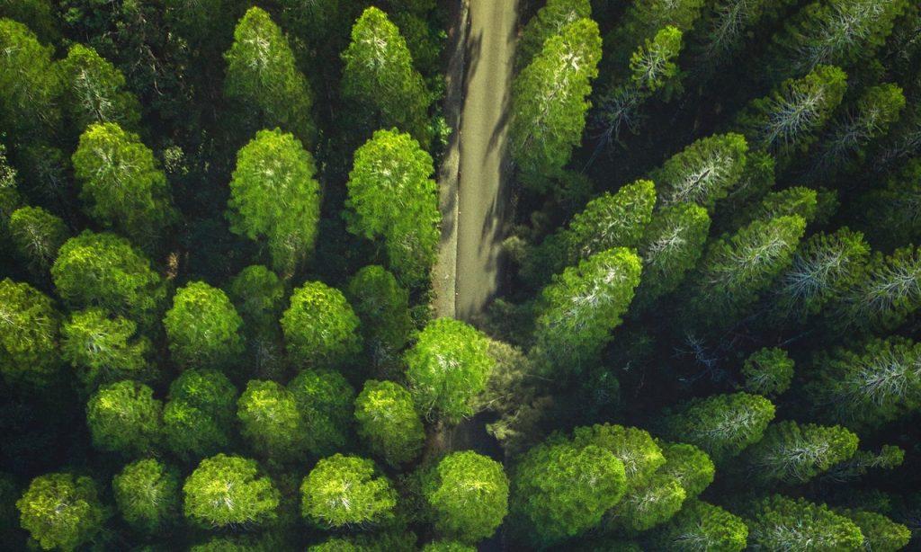 Vista aérea de árvores.