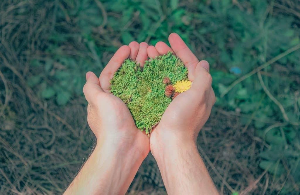 Mãos seguram grama criando formato de coração.