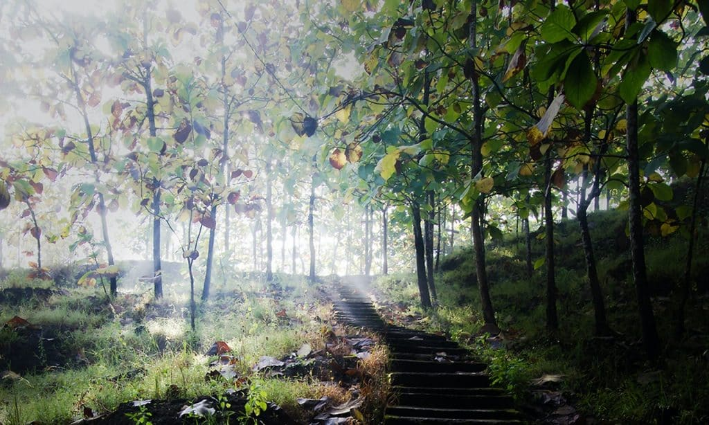 Escadas de concreto cinza que levam  às árvores.