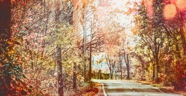 Árvores de folhas secas e alaranjadas.