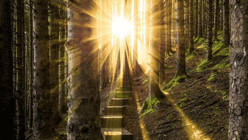 Caminho de luz dentro da floresta