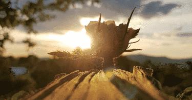 Flor desabrochando no troco de madeira sob o pôr do sol