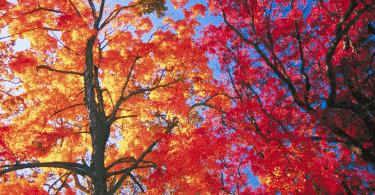 Árvores folhadas no outono