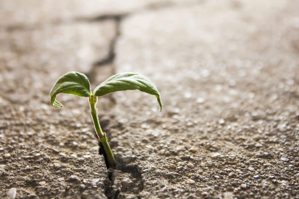 Planta crescendo na rachadura de um asfalto