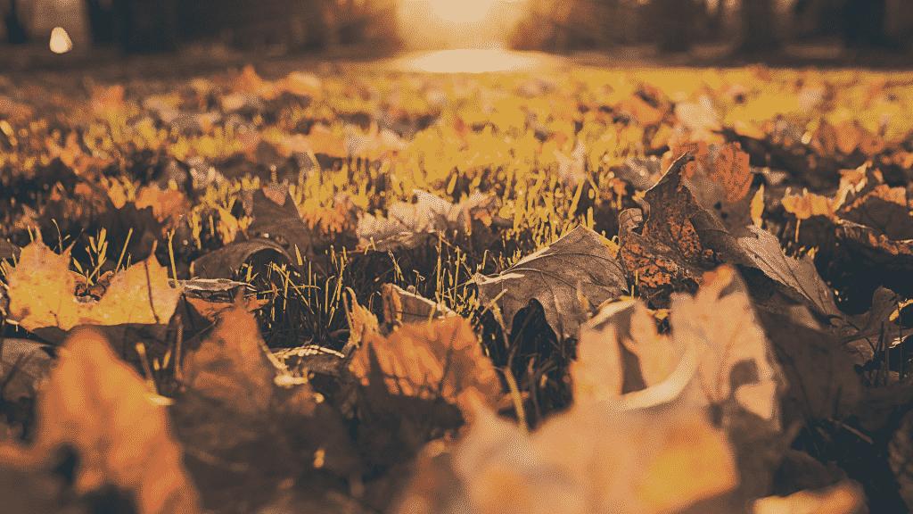 Folhas de árvore caídas no grama durante outono