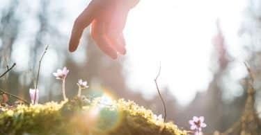 Mão masculina próxima de plantas. Ao fundo, há a luz solar.