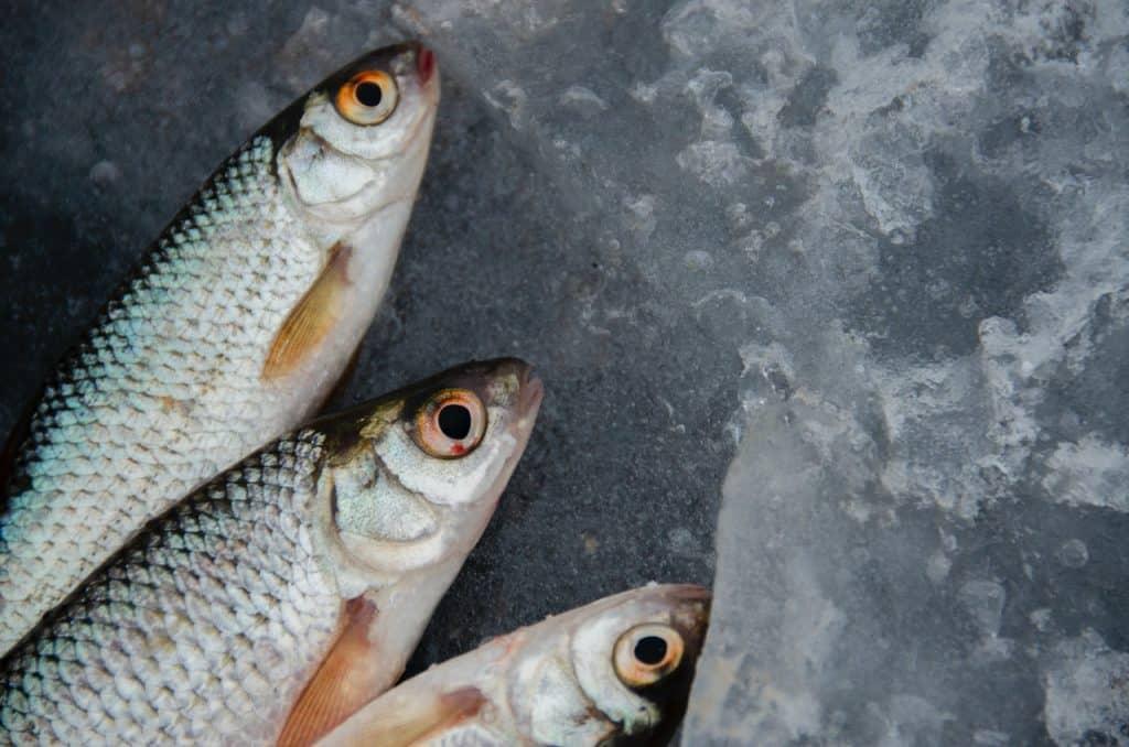 Peixes.