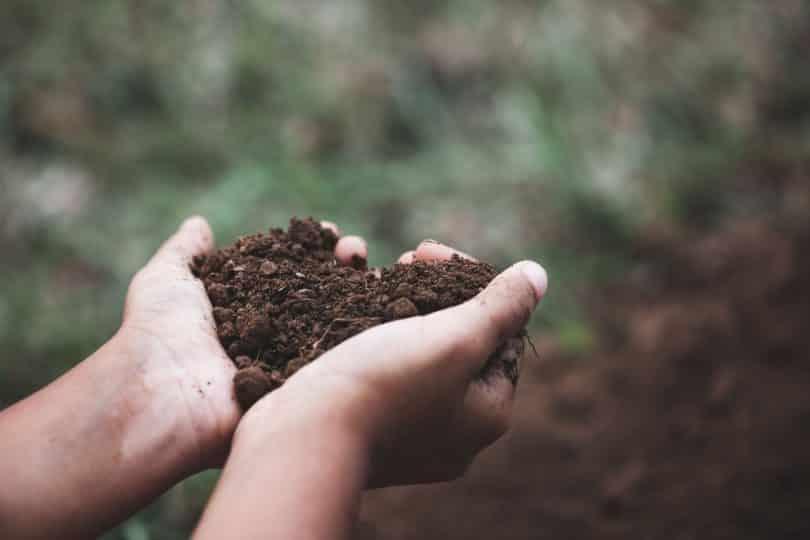 Mãos brancas segurando terra formando coração.