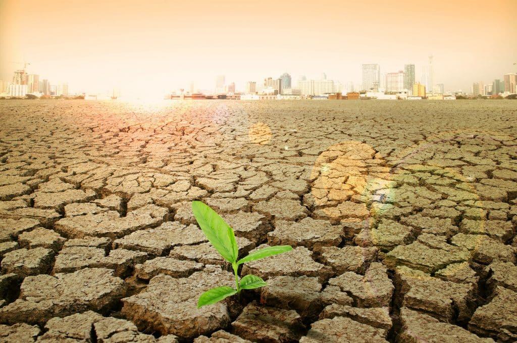Planta crescendo entre a erosões da terra seca