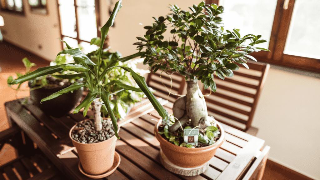 Vasos de planta sobre mesa de madeira