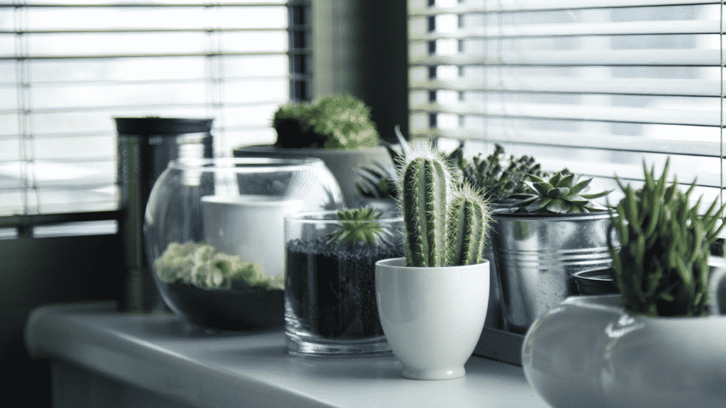 Vasos de plantas em sala de estar