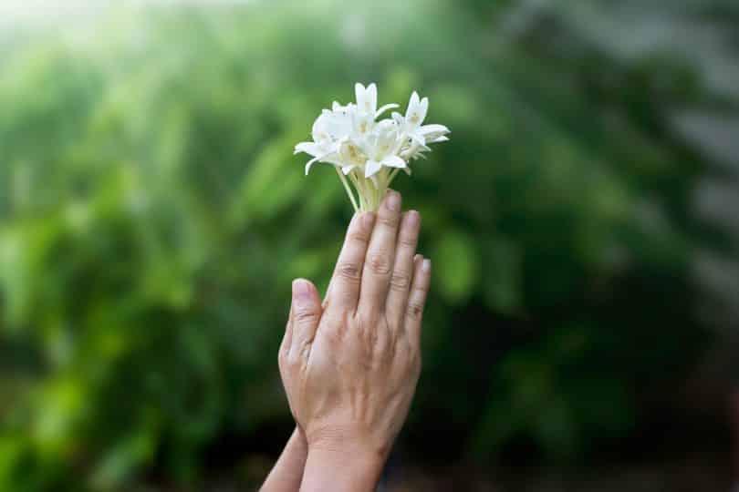 Mãos seguram flor branca em cenário externo.