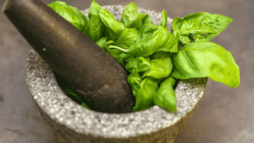 Imagem de um pote com folhas de manjericão