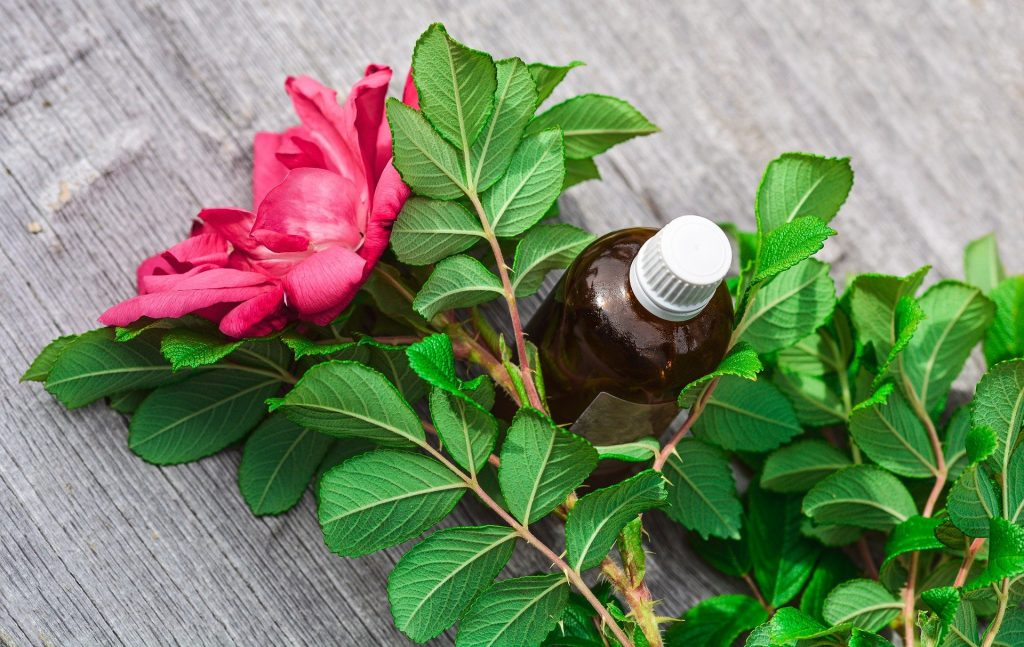 Imagem de um botão de rosa aberto na cor avermelhado. O botão está com os galhos cheios de folhas verdes. Entre os galhos um frasco de vidro marrom com tampa branca contendo óleo de rosa-mosqueta.