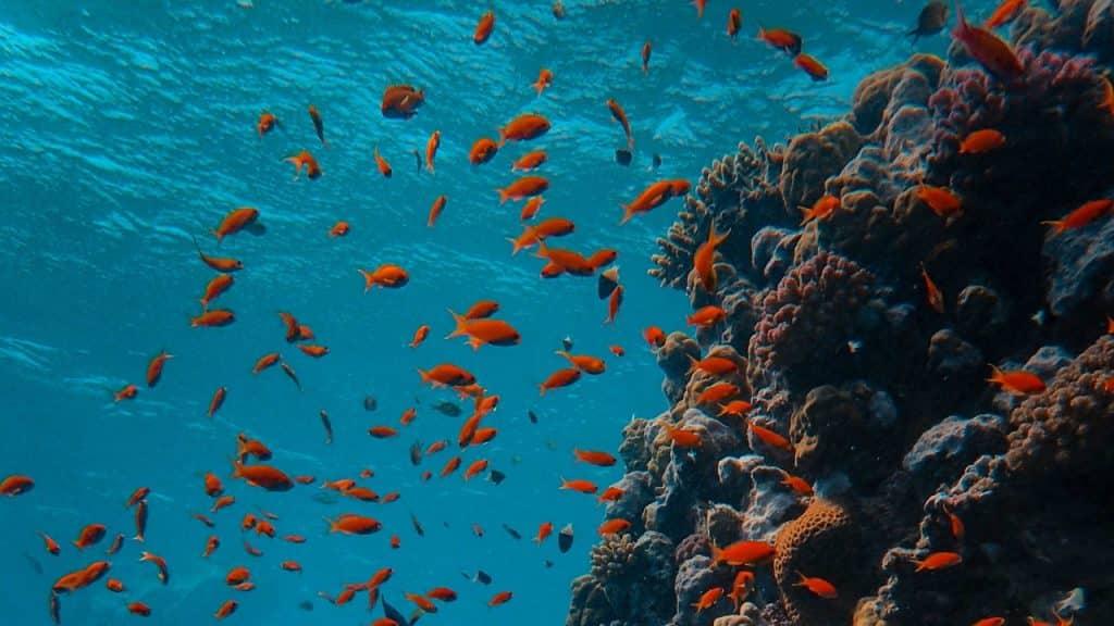 Peixes em oceano.