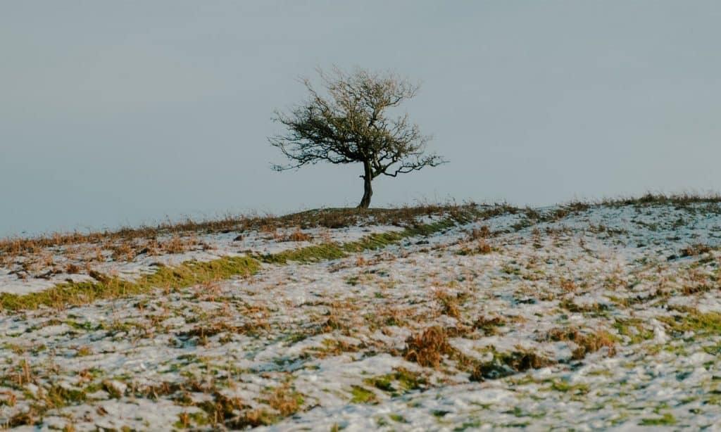 Campo pouco íngreme com uma árvore seca no topo.