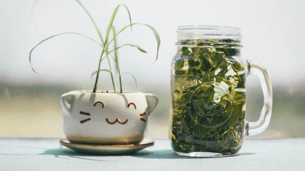 Recipiente de vidro com folhas verdes em seu interior. Ao lado, há uma xícara de porcelana caracterizada como um gato.