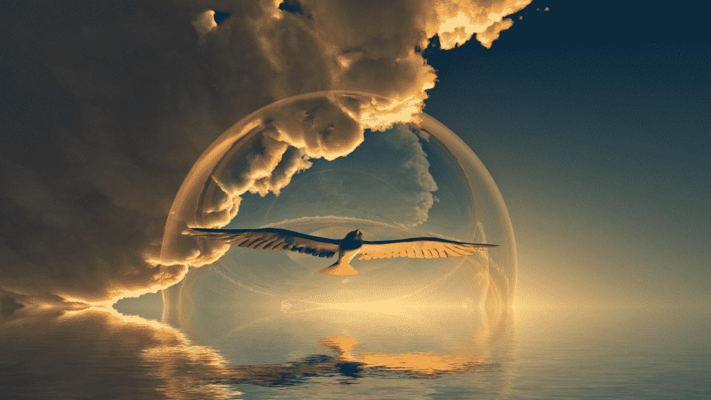 Águia sobrevoando as águas sob o por do sol