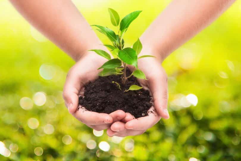 Mãos de criança fazendo plantação.