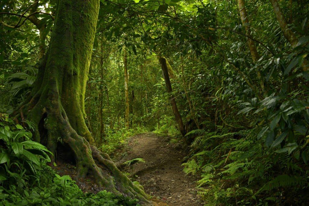 Floresta tropical simbolizando a natureza