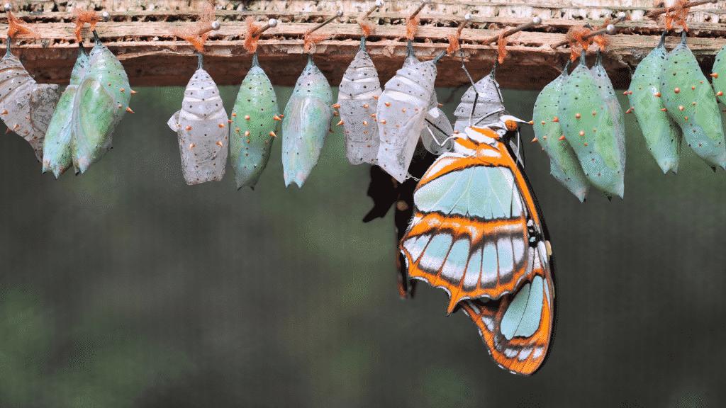 Imagem de uma borboleta saindo do casulo