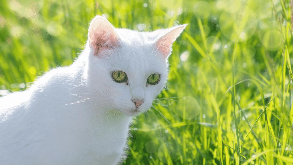 Imagem de um gato branco em um jardim