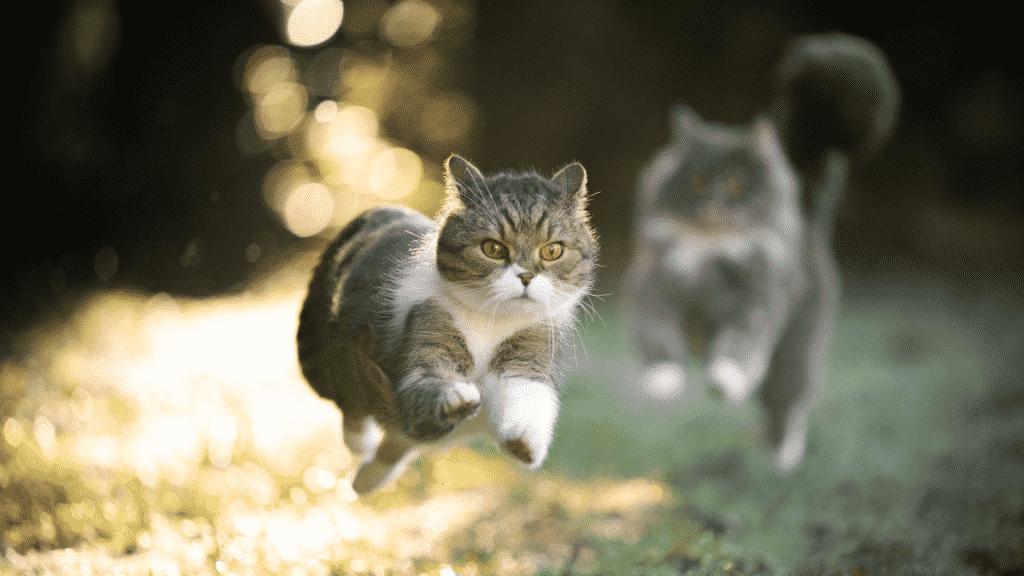 Imagem de um gato correndo em um jardim